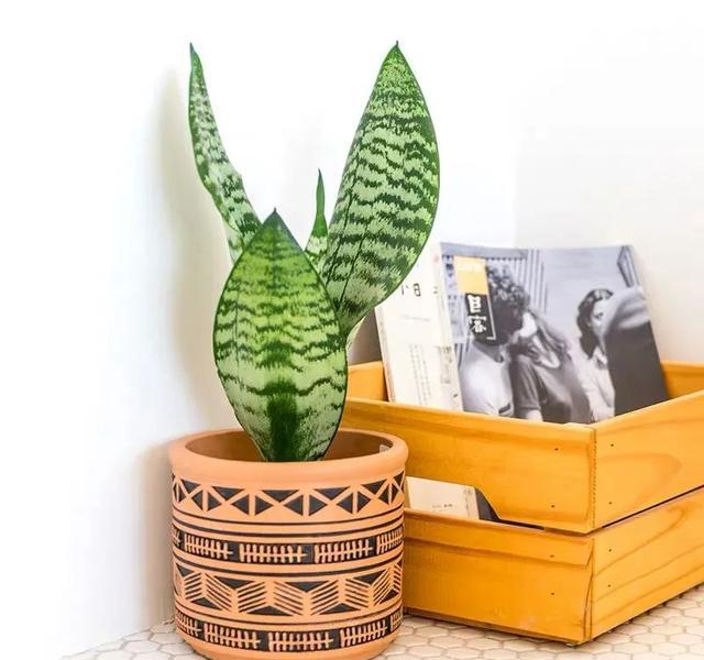 在窗邊或窗台,種植黃金葛、虎尾蘭等好看又易種的綠色植物,既可吸附灰塵,讓室內空氣更清新,又能達到降溫效果